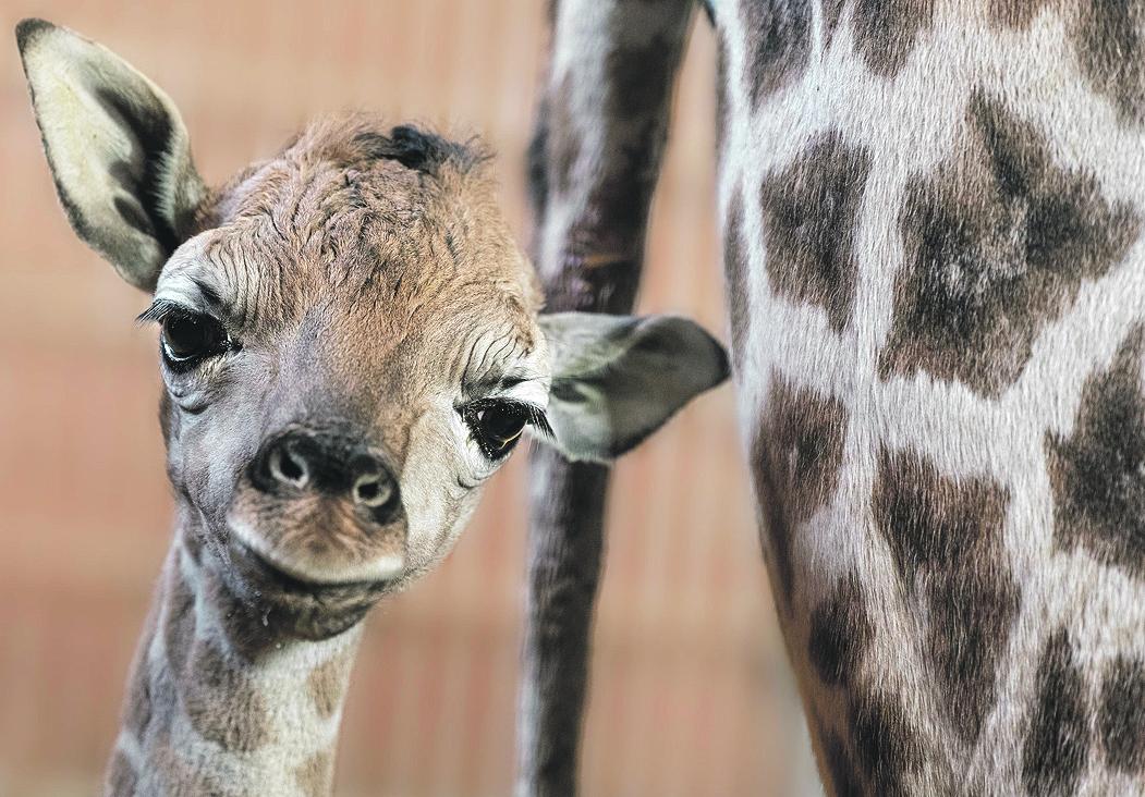 Foto: Zoo Schmiding